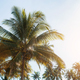 Coconut tree with sunlight - PhotoDune Item for Sale