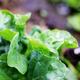 vegetable in farm - PhotoDune Item for Sale