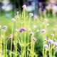 Verbena with beautiful in garden - PhotoDune Item for Sale