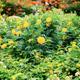 Marigold in the garden - PhotoDune Item for Sale