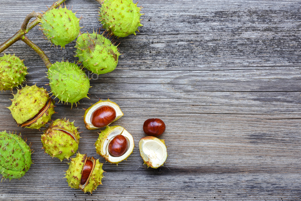 Chestnut on old wooden background with copy space for your text. - Stock Photo - Images