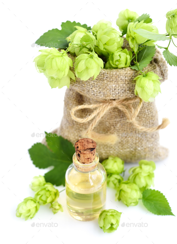 Fresh green hops (Humulus) in burlap bag with medicinal plant ex - Stock Photo - Images