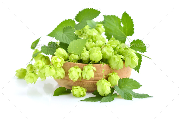 Hop cones (Humulus) on a wooden bowl isolated on white backgroun - Stock Photo - Images