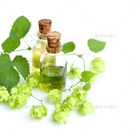 Fresh green hop branch (Humulus) with medicinal plant extract in - Stock Photo - Images