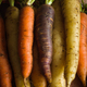 Colorful Heirloom Carrots - PhotoDune Item for Sale