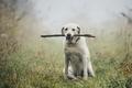 Dog in autumn fog - PhotoDune Item for Sale