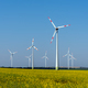 Yellow blossoming rapeseed and some wind energy plants - PhotoDune Item for Sale
