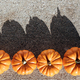 Pumpkins in the field - PhotoDune Item for Sale