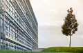 High rise modern office building with single tree - PhotoDune Item for Sale