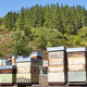 Beehives. Traditional colored wooden box. Muniellos, Asturias, Spain. Horizontal - PhotoDune Item for Sale