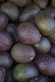 Whole fresh avocado's full frame - PhotoDune Item for Sale