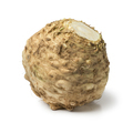 Fresh picked celery root - PhotoDune Item for Sale