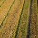 View of a field of corn - PhotoDune Item for Sale