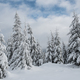 Winter wonderland, spruce tree forest covered with fresh snow - PhotoDune Item for Sale