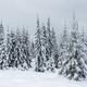 Christmas background with snowy fir trees. Amazing winter landscape - PhotoDune Item for Sale