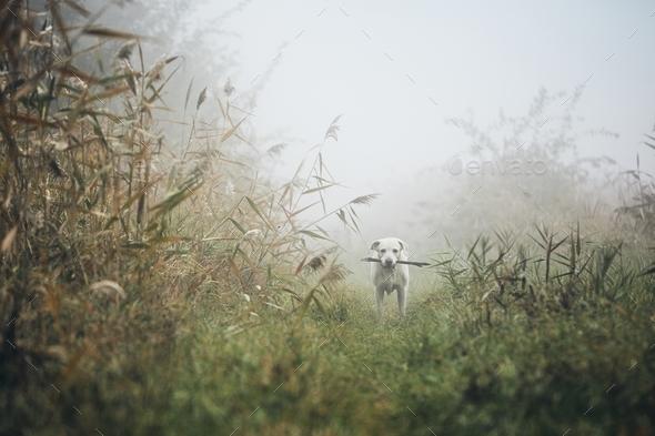 Sad dog in autumn fog - Stock Photo - Images