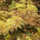 Fern in autumn forest - PhotoDune Item for Sale