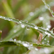 Water drops on the grass - PhotoDune Item for Sale