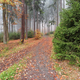 Forest path in the autumn forest - PhotoDune Item for Sale