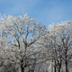 Bare branches of the trees covered with frost - PhotoDune Item for Sale