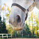 Close-up of a horse's nose - PhotoDune Item for Sale