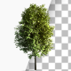 3 Growing Trees In The Wind - VideoHive Item for Sale