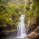 Foggy Rainforest waterfall New Zealand - PhotoDune Item for Sale