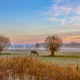 Pollard willows and horses - PhotoDune Item for Sale
