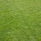 Close-up view of green grass, backdrop, background. - PhotoDune Item for Sale