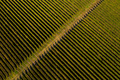 Aerial drone view of vineyard in late afternoon lights - PhotoDune Item for Sale