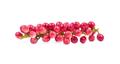 Antidesma puncticulatum  Thai Blueberry Fruit (Mamao) isolated o - PhotoDune Item for Sale