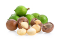 macadamia nuts isolated on white background. - PhotoDune Item for Sale