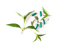 fresh kariyat herb plant on white background - PhotoDune Item for Sale