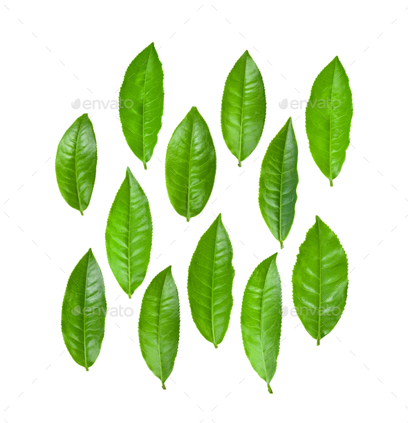 Green tea leaf isolated on white background - Stock Photo - Images