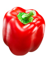 Red bell pepper c. annuum, paths - PhotoDune Item for Sale