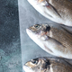 Sea bream (dorada) fish - PhotoDune Item for Sale