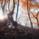 Magical old tree with sun rays in the morning. Forest in fog - PhotoDune Item for Sale