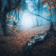 Mystical forest in blue fog in autumn. Colorful landscape - PhotoDune Item for Sale