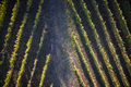 View of a vineyard - PhotoDune Item for Sale