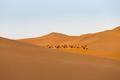 desert landscape and camel team - PhotoDune Item for Sale