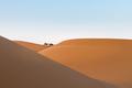 desert landscape at dusk, far away camels and beautiful sand dunes - PhotoDune Item for Sale