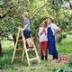 A small boy with his gradparents picking apples in orchard. - PhotoDune Item for Sale