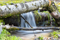 forest scene of the stream and fallen silver birch - PhotoDune Item for Sale