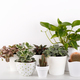 Modern houseplants - PhotoDune Item for Sale