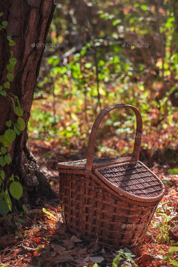 Picnic basket in an autumn forest in sunlight with copy space - Stock Photo - Images
