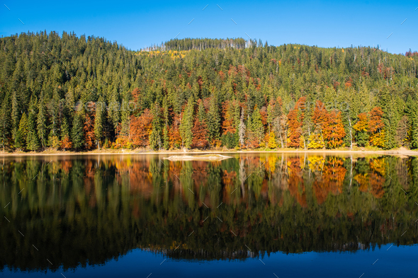 Perfect autumn tree reflections in lake - Stock Photo - Images