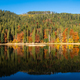 Perfect autumn tree reflections in lake - PhotoDune Item for Sale