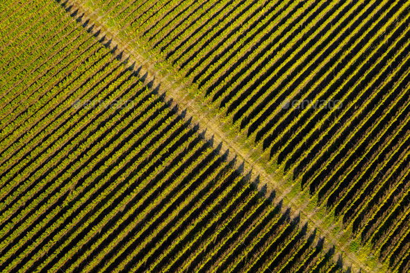 Aerial view of vineyard in late afternoon lights - Stock Photo - Images