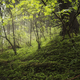 Green environment background - PhotoDune Item for Sale