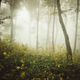 Enchanted Transylvanian forest with fog - PhotoDune Item for Sale